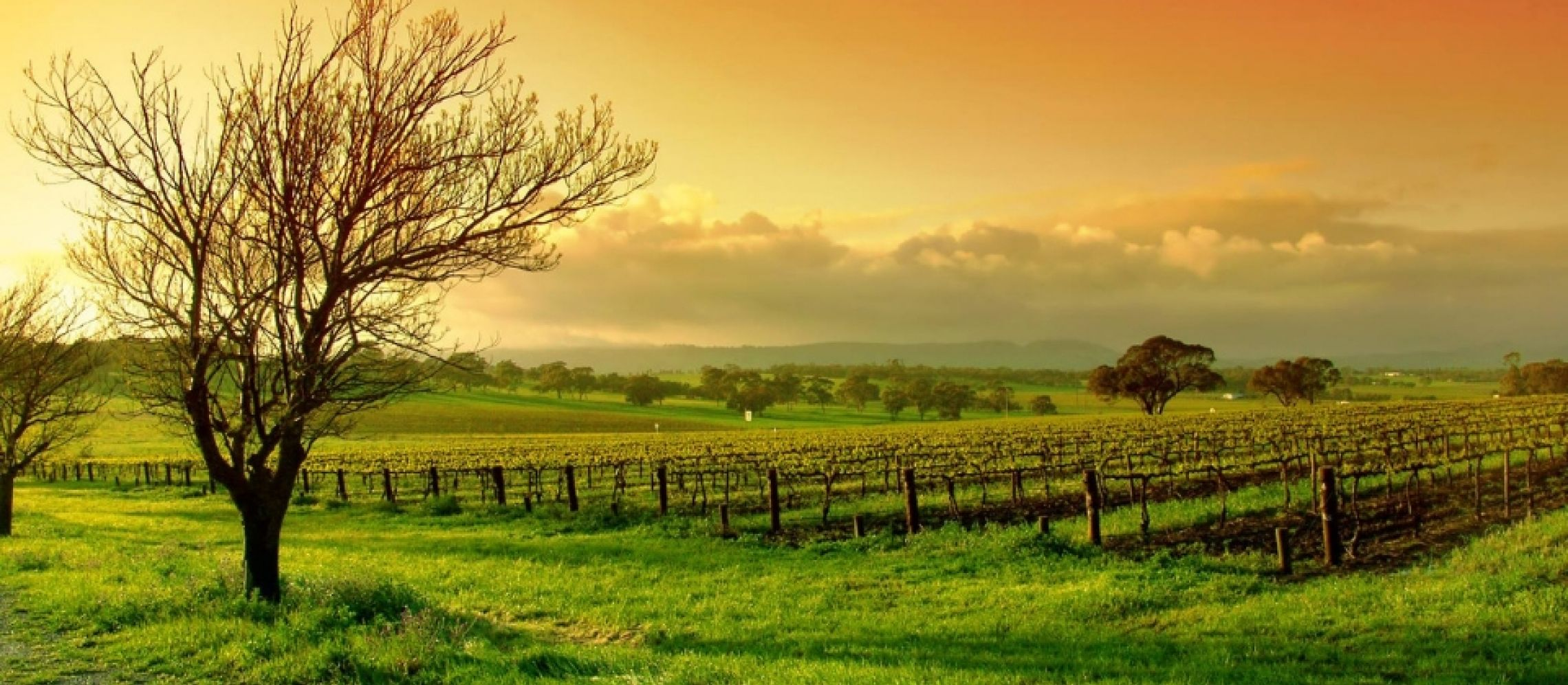 Photo for: Allegiance Wines- Committed To Combine Outstanding Viticulture And Wine-making