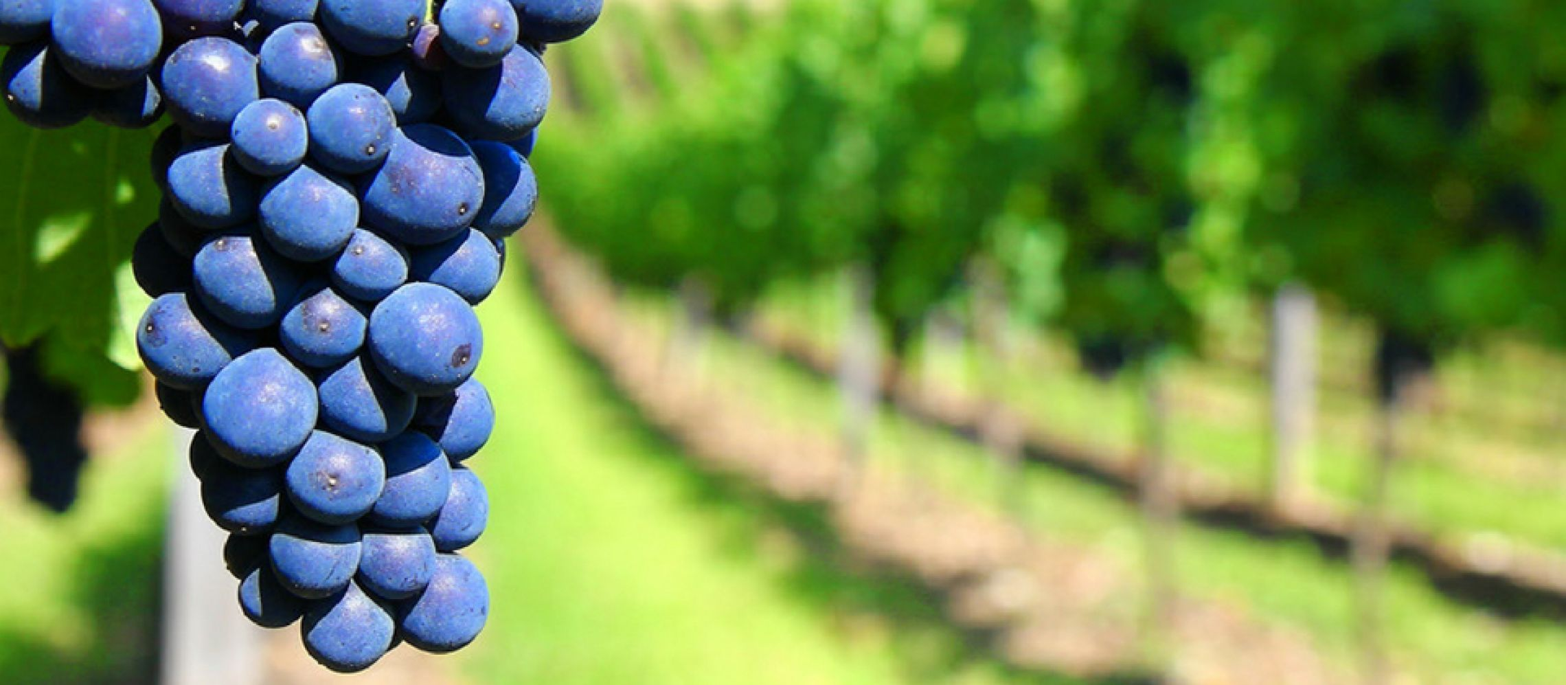 Photo for: Direct Wines Production - A Global Wine Trader