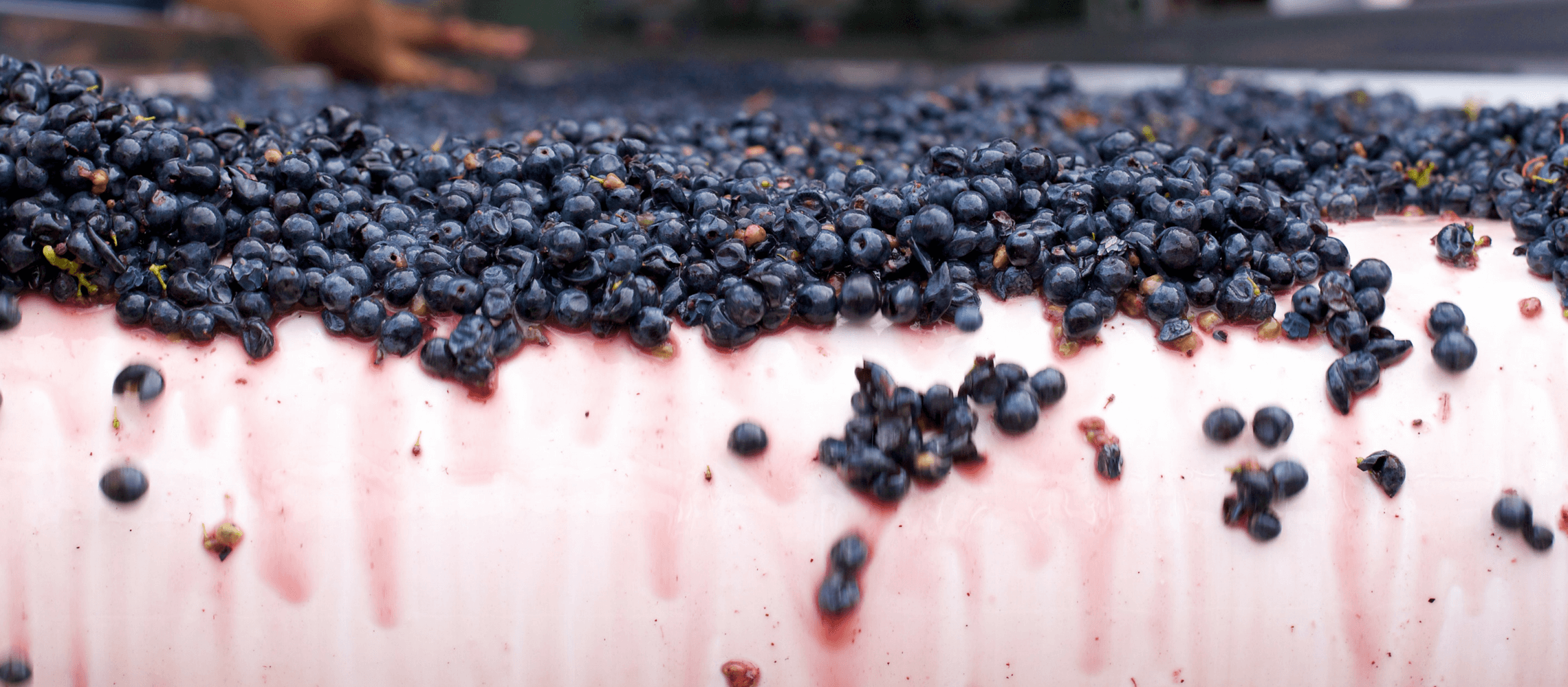 Photo for: Affecting Innovation in Winemaking