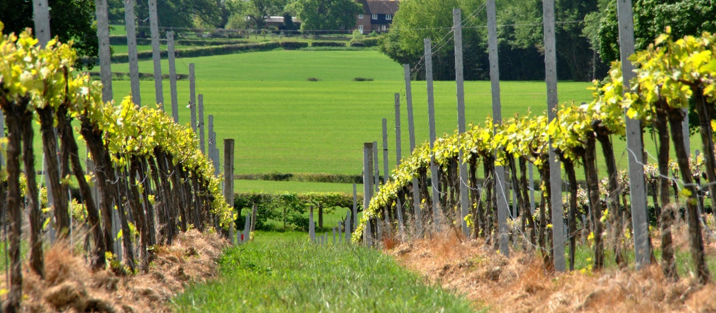 Photo for: What Direct-to-Customer Sales has taught wineries during Covid