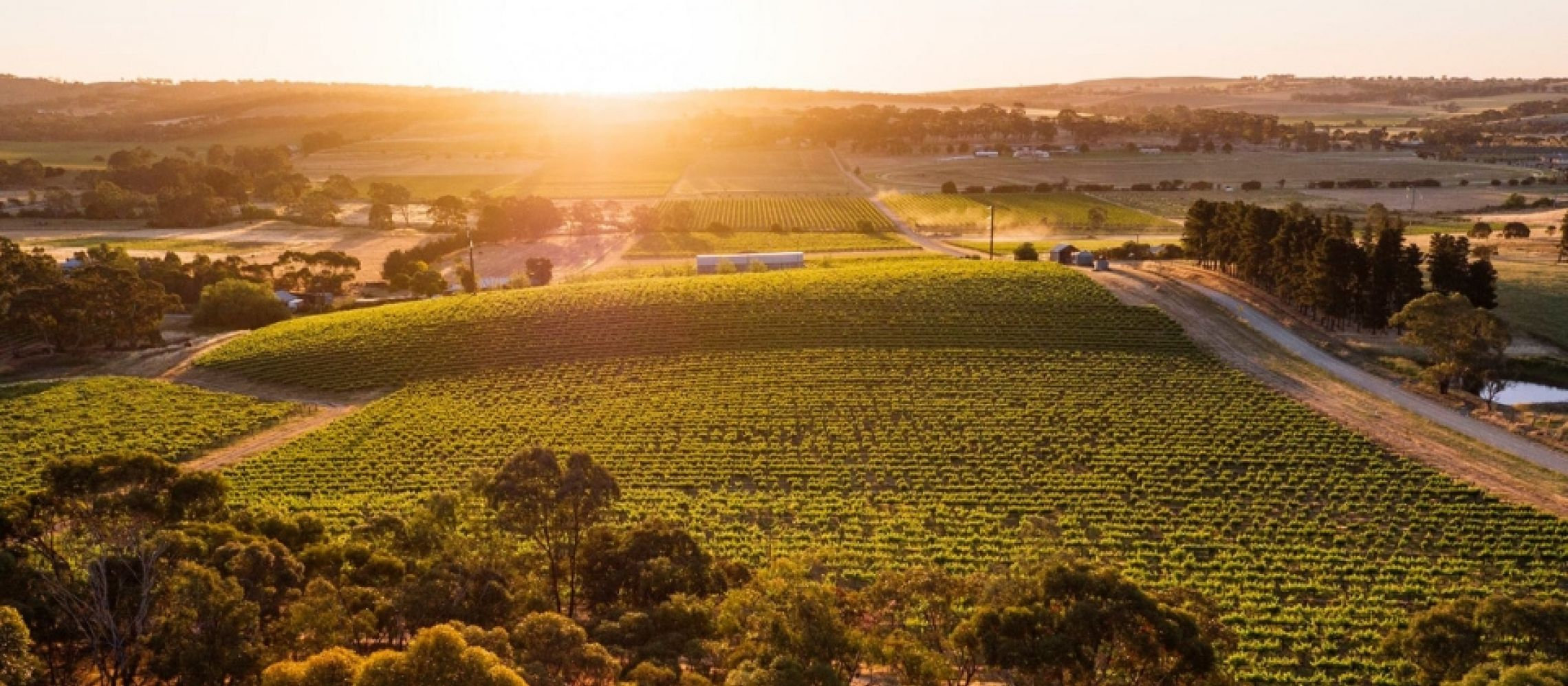 Photo for: Byrne Vineyards- Family Owned and Estate Grown in Australia