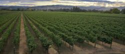 Photo for: A Hidden Gem Located In The Heart Of Napa Valley