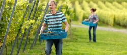 Photo for: Why Natural Wines Are the New Wine Movement