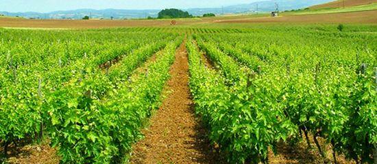 Photo for: Chatzivaritis Estate- Award Winning Winery from Greece