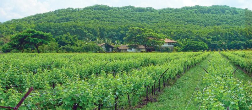 Photo for: Major Wine Producing Regions of India